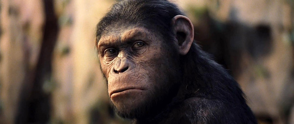 A Rise of the Planet of the Apes Trilogy?